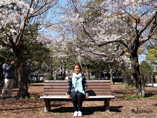 sakura-hanami-in-hiroshima