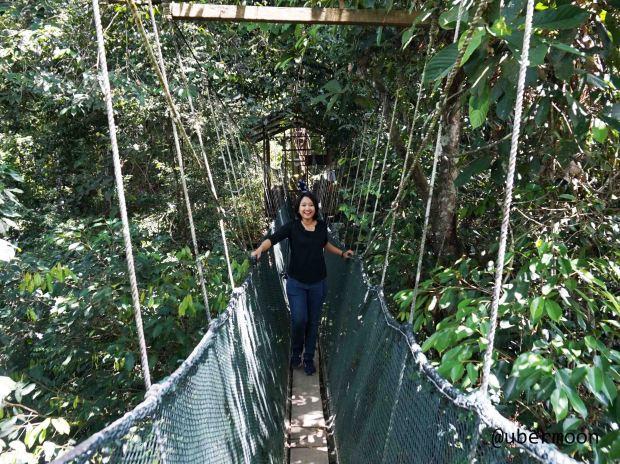 canopy-walk-poring-hotspring