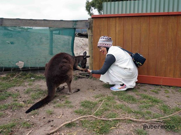 feeding-kangaroo-at-maru-wildlife-park
