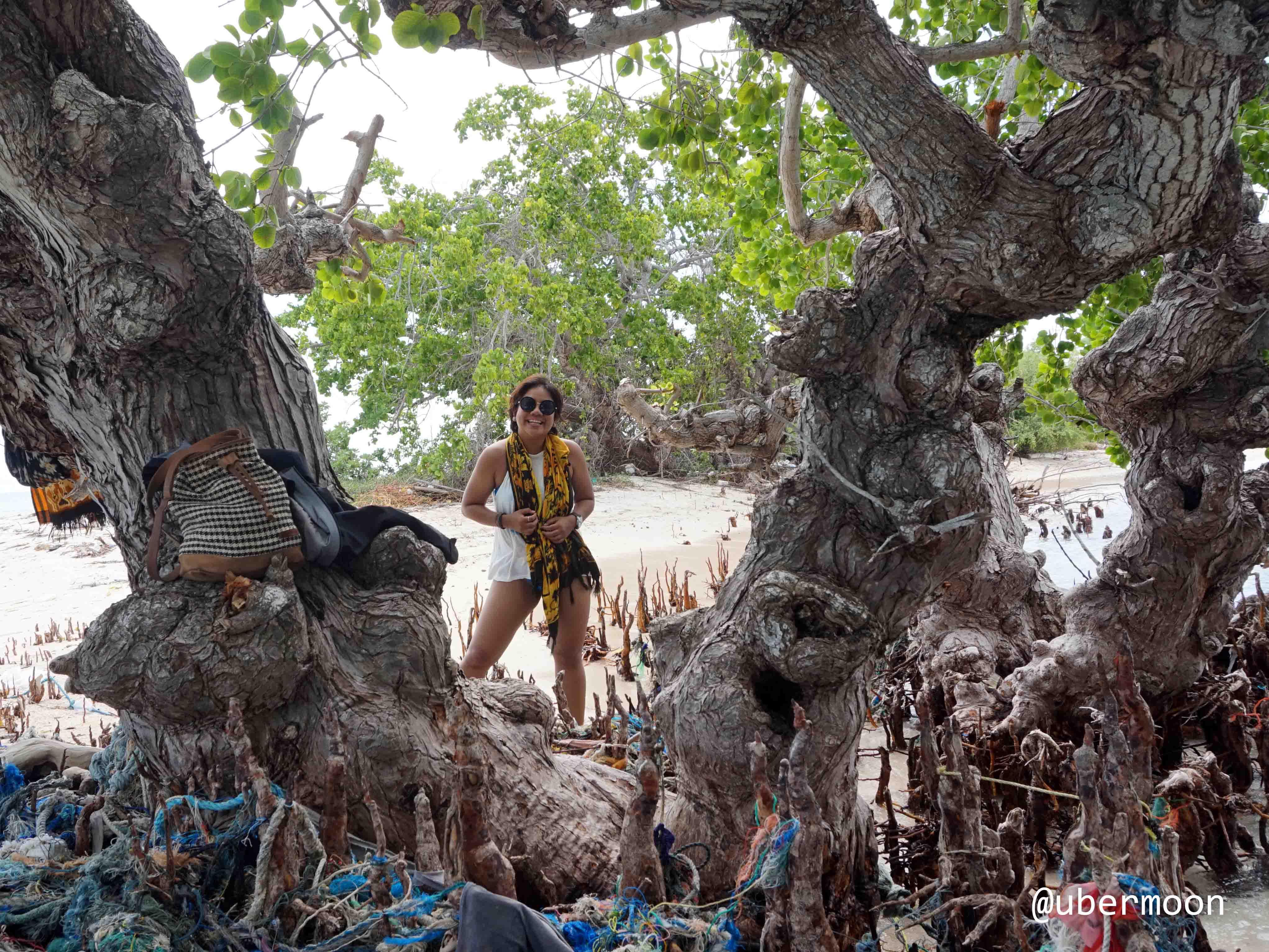 pohon-bakau-besar-tarupa-kecil-taka-bonerate