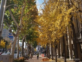 daegu-in-autumn