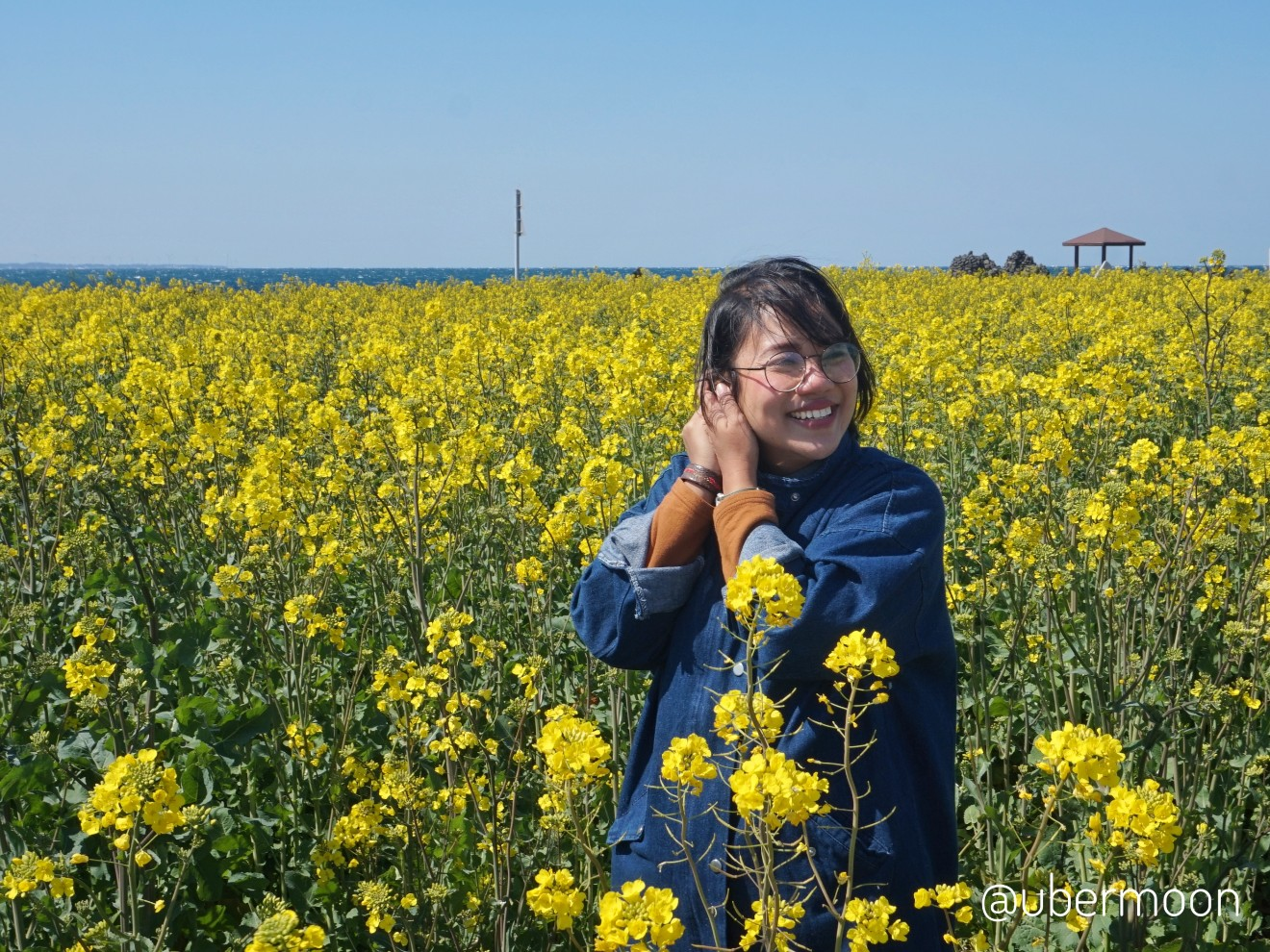 canola-field-at-udo-island