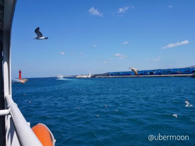 burung-dalam-perjalanan-ferry-ke-udo-island